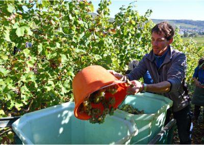 Matthieu surveille les raisins des Grandes Lignes